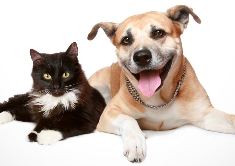 cuidado animais uninorte