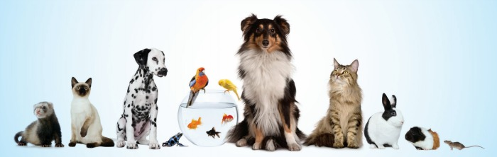 direito_animais700x